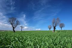 Spring air (LucaPicciau) Tags: sardegna ca blue trees sky sun tree verde green primavera clouds spring nuvole sardinia blu air meadow erba sole prato aria interno villanovafranca marmilla trexenta lupi spectacularlandscape specland lupi75 villamar mywinners supershots gesico treesubject