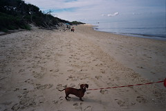 Maggie in Cape May