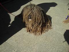 Dog Marley