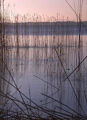 Mood of Silence (Kirsten M Lentoft) Tags: sunset reed water topc25 denmark naturescenes rightplacerighttime abigfave arresø arresoe momse2600 lamigliorefotodelmese kirstenmlentoft