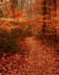 Natures Tapestry (rtalley001) Tags: autumn orange fall leaves landscape leaf path alabama decatur orton napg abigfave wheelernationalwildliferefuge dancybottomsnaturetrail ricktalley