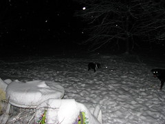 Nellie and Boomer out in the snow at night