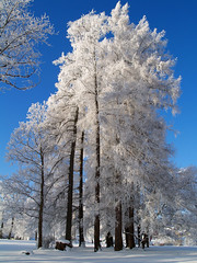 Winter in the park (Krogen) Tags: park winter nature norway landscape norge vinter natur norwegen olympus noruega scandinavia akershus romerike krogen landskap noorwegen noreg eidsvoll skandinavia e400 abigfave