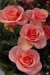 peachy roses (bookgrl) Tags: pink roses flower rose peach valentine bouquet wcshart2007