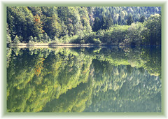 Reflections on the Krottensee (rotraud_71) Tags: autumn trees water forest reflections geotagged austria 1on1 salzkammergut upperaustria krottensee