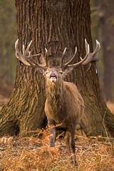 Richmond Park (Alex Hedger) Tags: nikond70 1224mmf4 alexhedger