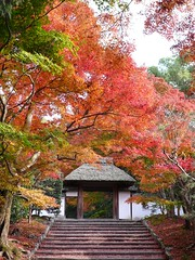 Gate of Anrakuji temple (安楽寺山門) (micamica) Tags: autumn red orange leaves yellow japan stairs temple kyoto 京都 紅葉