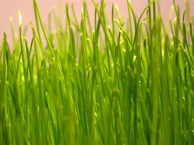 fresh green gras