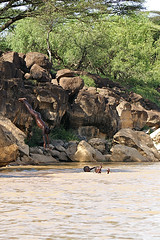 Swimming boys (imanh) Tags: africa boy lake boys swimming swim children meer child kenya dive kinderen afrika kenia iman jongen jongens baringo duiken heijboer imanh