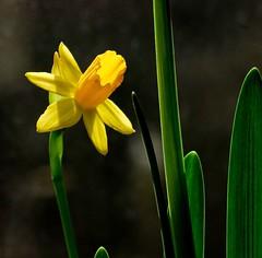 Framed In Golden Sunlight