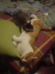 [柳丁] 你是我的抱枕 (7)
