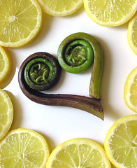 Fiddlehead Fern and Lemon Slices