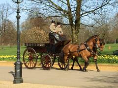 Carrozza ad Hyde Park (Studio Grafico EPICS) Tags: horses london hydepark cavalli londra calesse frustino cocchieri frustare