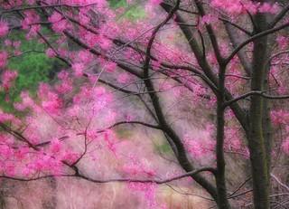 Spring's sprung