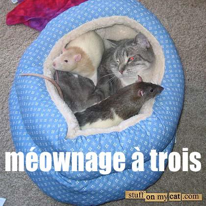 meownage a trois