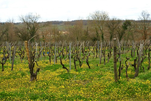 France spring 07 013