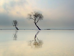 Dreaming............. (Nicolas Valentin) Tags: blue sky reflection tree water