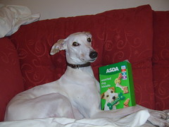 ASDA price (shoot rampton) Tags: life hairy dog greyhound white silly cute home animal crazy funny gorgeous fast lazy stupid muppet daft chilled