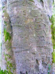 The Autograph Tree (IrishFireside) Tags: county ireland galway lady burren gregory gort irsh