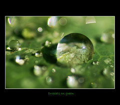 Droplets on green (Giorgos~) Tags: macro droplet giorgos naturesfinest eow explorepage supershot i500 flickrsbest mywinners abigfave anawesomeshot goldenphotographer
