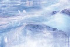 (cara.) Tags: nova bench virginia va damn meadowlarkbotanicalgardens ♥ behindblueeyes aracay viennavirginia ♫♫ arawallpaper photofiddlerblueswirls