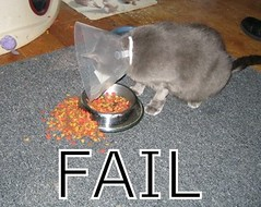 stupid fail cat photo
