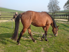 DSC02487 (jacaranda4) Tags: horse cheval mare du concours colt stallion francais chevaux filly selle foal cso poulain dressage jument coty complet elevage