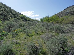 Looking up the Tarpiscan Creek Canyon