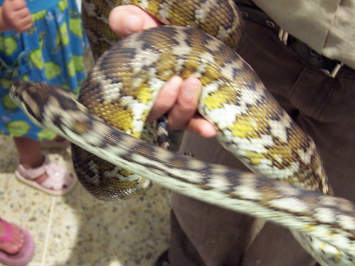 Carpet snake Deepwater Plaza Woy Woy