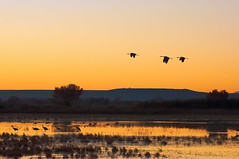 Crane Rise (Fort Photo) Tags: morning sky sun newmexico color bird nature birds animal silhouette clouds sunrise landscape dawn bravo searchthebest crane wildlife birding cranes bosque ave nm ornithology bosquedelapache avian sunup daybreak 2007 sandhillcrane bif morn firstlight nwr birdinflight vibrancy supershot magicdonkey 50faves featheryfriday outstandingshots flickrsbest abigfave anawesomeshot superbmasterpiece superhearts