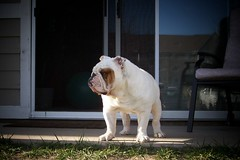Hey...what's over there? (Stryke Force) Tags: bulldog stryker