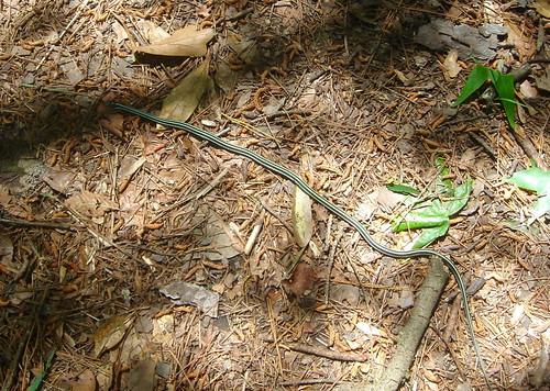 4C-snake2.jpg