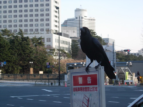 Cuervos en Tokyo class=