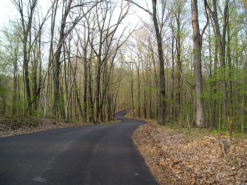 Bean Blossom Road