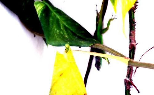 Lizard Incognito