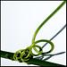 green plant spiral