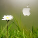 Apple image, photo or clip art