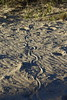 2016.11.17.06.10.10-Snake trails, Menindee Lake (www.davidmolloyphotography.com) Tags: newsouthwales darlingriver menindee kinchega kincheganationalpark reptile snake
