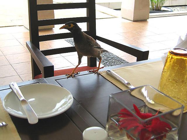 Птичка в ресторане. Ненавязчиво клянчила хлеб, пока я ждал блюда.