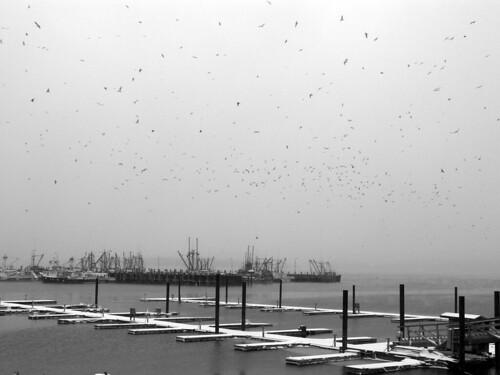 Skyful of gulls