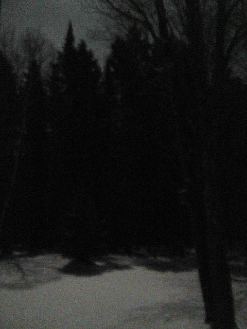 Treeline.