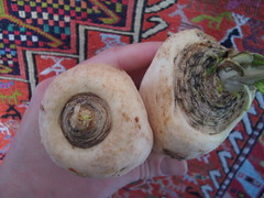 parsnip vs parsley root 1