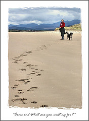 """Come on! What are you waiting for?"" (HaukeSteinberg.com) Tags: ocean ireland sea dog beach dogs strand landscape bay dingle footprints irland kerry atlantic 5bestdogs bordercollie a80 pawprints ringofkerry rossbeigh colie glenbeigh ire canonpowershota80 abigfave superbmasterpiece superhearts rossbeighstrand"