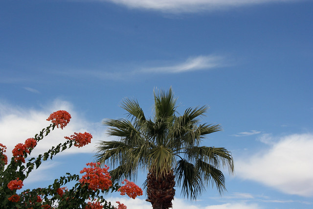 Palm Trees and Cactus: Red Flowers and Palm Tree