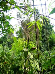 Джунгли Таиланда.