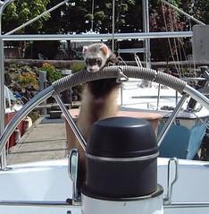 Ferret Captain