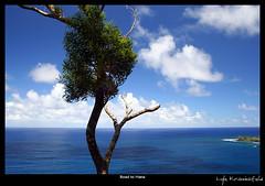 Road to Hana (Lyle Krannichfeld) Tags: ocean blue sky clouds landscape hawaii maui hana krannichfeld