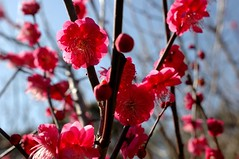 DSC_0462 (TOKI*) Tags: flower japan