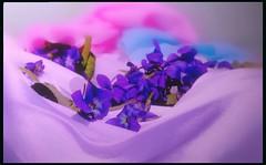 feeling-Spring (makunia) Tags: bravo searchthebest blueribbonwinner splendiferous magicdonkey flickrsbest abigfave anawesomeshot colorphotoaward impressedbeauty superbmasterpiece diamondclassphotographer flickrdiamond