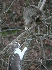Fight! #3 - 3/3/07 (robert_rvnwd) Tags: sabrina gerbil fight
